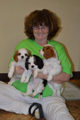 Shirley with 3 puppies